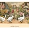 Postkarten__Seite_47