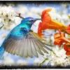 04_kolibri