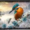 01_eisvogel