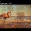 03_flamingo_nest